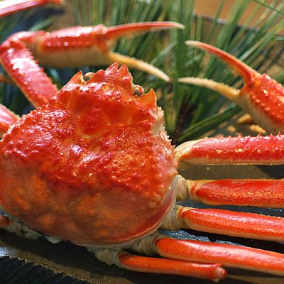*AUG Offer* Hokkaido Snow Crab Cooked