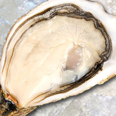 *FEB Delivery* Mermaid Oyster No.2 (France) x 6pcs