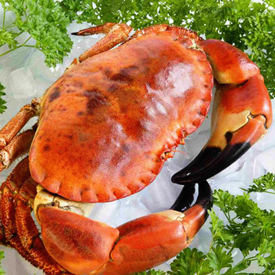 *JUL Offer* Norway Brown Crab Cooked