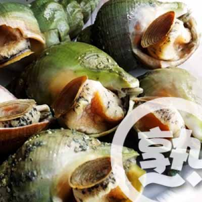 Canadian Whelk Cooked